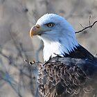 Brackendale Eagle by JennaKnight