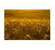 Grass of gold Art Print