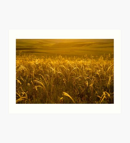 Grass of gold Art Print
