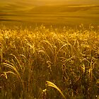 Grass of gold by iPostnikov
