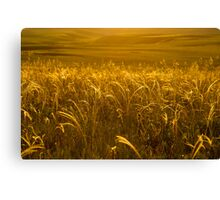 Grass of gold Canvas Print