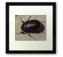 Beetle Framed Print