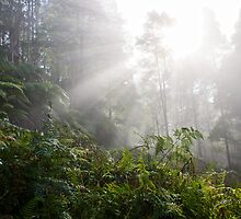 Forest with fog by iPostnikov