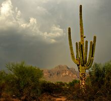The Golden Saguaro  by Saija  Lehtonen