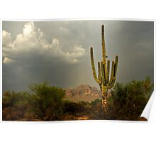The Golden Saguaro  Poster