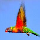 Bird In Flight by photoj