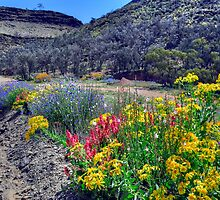 Wildflowers By The Roadside by Terry Everson