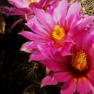 Crowned Cacti by Pro Nature Photography