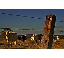 Beyond the fence Photographic Print
