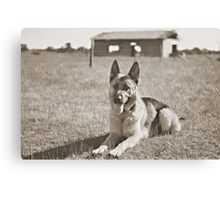 German Shepherd  Canvas Print