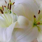 Flower - White Lily by Art-Motiva