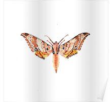 Ambulyx dohertyi Poster