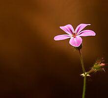 Little Girly Flower by Paul-M-W