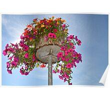 Floral Display -Lyme Regis. Dorset. Poster