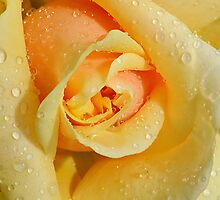 Pucker Up by relayer51