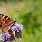 Butterfly Bokeh by M.S. Photography/Art