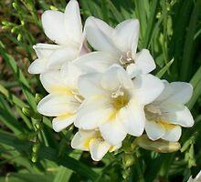 Springtime in my garden by rosedragon