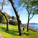 A Sunny Walk Through Lyme's Gardens, Lyme,Dorset.Uk by lynn carter