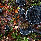 Tyromyces merulinus by Travis Easton