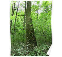 Mossy Oak Poster