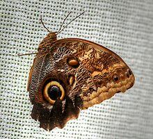 Blue Morpho Butterfly by Larry Trupp