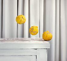 Still Moment with Bush Lemons by sramacher
