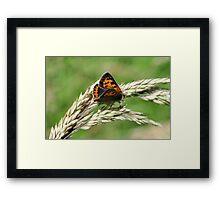 Small Copper Framed Print