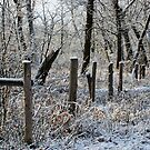 Frosty fence by Marcelene McCowan