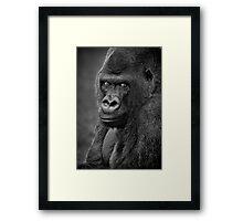 Lowland Gorilla Framed Print