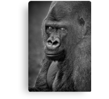 Lowland Gorilla Metal Print