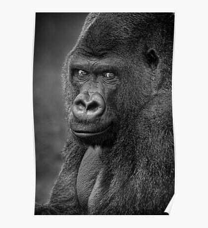 Lowland Gorilla Poster