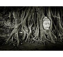 Buddha in the tree Photographic Print