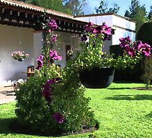 Petunias and Inside Yard by Shirley  Poll