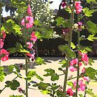 Hollyhocks by Shirley  Poll