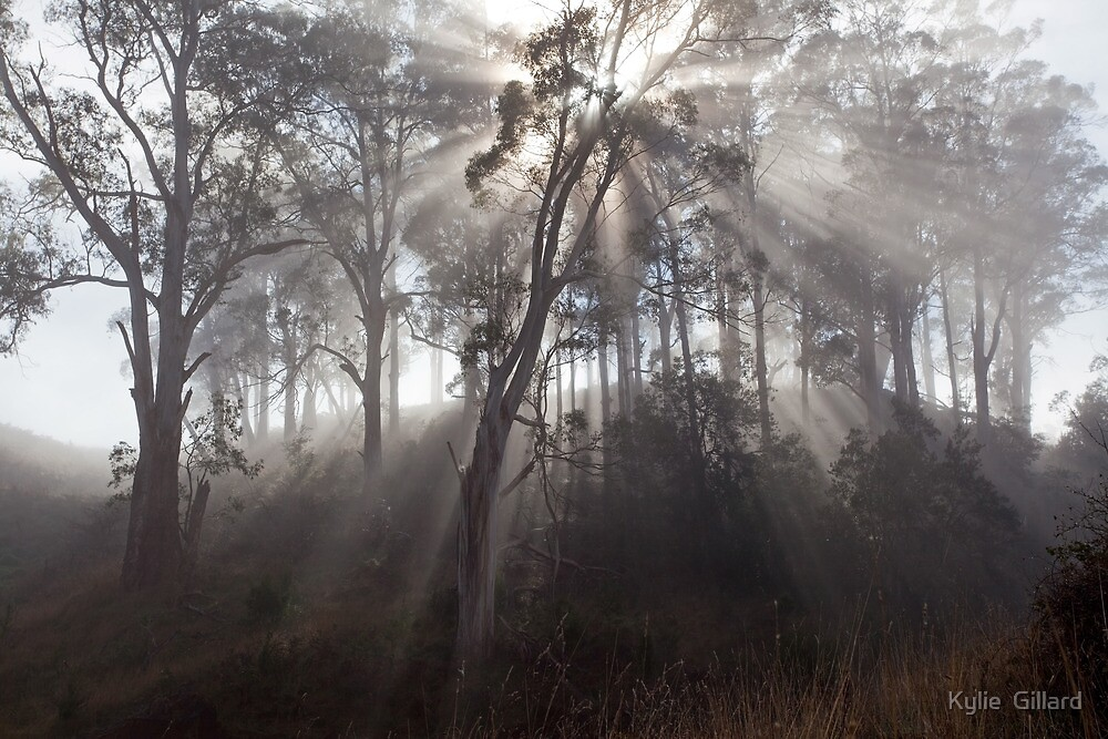 Morning Glory by Kylie  Sheahen