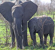 Cosy with mom ! by jozi1
