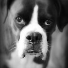 Arwen's Portrait - Female Boxer by Evita