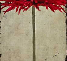 Red Gerbera Daisy by photecstasy