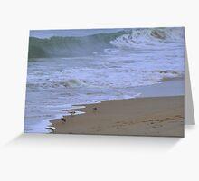 Piping Plovers By The Sea Greeting Card