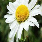flower by ama200707