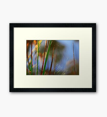 Broken Web Framed Print