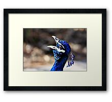 Singing for the Crowds Framed Print