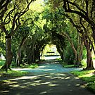 Ohlone College Walkway by Ellen Cotton