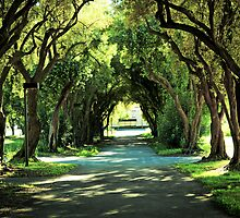 Ohlone College Walkway by Ellen Cotton
