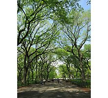 Central Park Path 2 Photographic Print