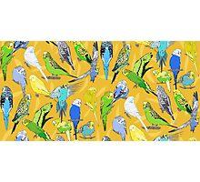 Budgies - Yellow Photographic Print