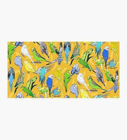 Budgies - Yellow Photographic Print