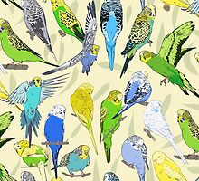 Budgies - Pale by Tom Henderson