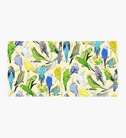 Budgies - Pale Photographic Print