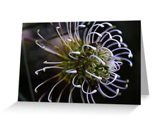 Grevillea commutata Greeting Card